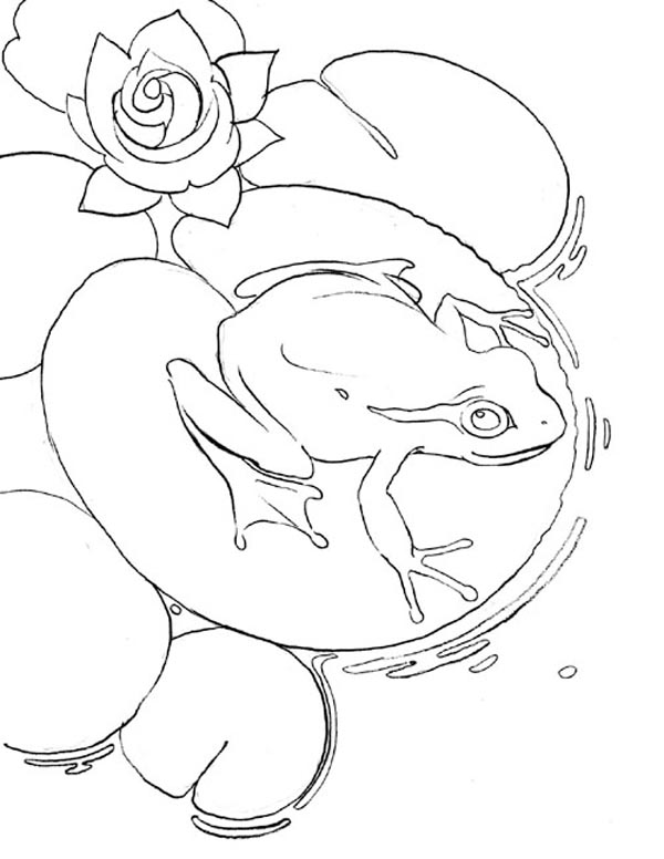 Lily Pad And Frog Coloring Page : Color Luna   776x600